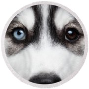 Closeup Siberian Husky Puppy Different Eyes Round Beach Towel