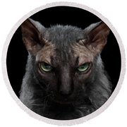 Closeup Werewolf Sphynx Cat Angry Looking In Camera Isolated Black Round Beach Towel