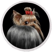 Closeup Yorkshire Terrier Dog, Long Groomed Hair Pity Looking Back Round Beach Towel