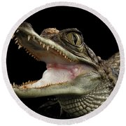 Closeup Young Cayman Crocodile, Reptile With Opened Mouth Isolated On Black Background Round Beach Towel by Sergey Taran