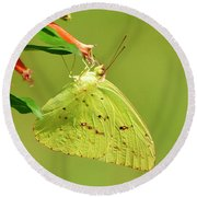 Round Beach Towel featuring the photograph Clouded Sulphur Butterfly Macro by Kathy Baccari