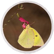 Clouded Sulphur Butterfly On Pink Wildflower Round Beach Towel