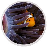 Clownfish And Anemone Round Beach Towel