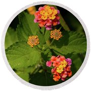 Cluster Of Lantana Flowers Round Beach Towel