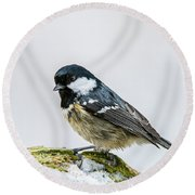 Round Beach Towel featuring the photograph Coal Tit's Profile by Torbjorn Swenelius