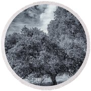 Coast Live Oak Monochrome Round Beach Towel