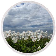 Coastal Backlit Anemones Round Beach Towel