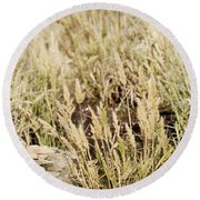 Coastal Grasses Round Beach Towel