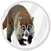 Coatimundi Round Beach Towel