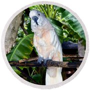 Cockatoo On Perch Round Beach Towel