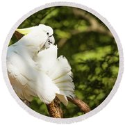 Cockatoo Preaning Round Beach Towel