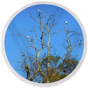 Round Beach Towel featuring the photograph Cocky Tree  by Mark Blauhoefer