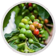 Coffee Plant Round Beach Towel