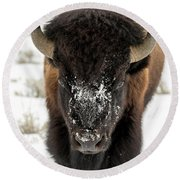 Cold Bison Stare Round Beach Towel