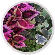 Round Beach Towel featuring the mixed media Coleus And Ivy- Photo By Linda Woods by Linda Woods