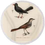 Round Beach Towel featuring the drawing Collared Palm Thrush And Chestnut-fronted Helmetshrike by J D L Franz Wagner