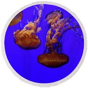 Collection Of Jellyfish Round Beach Towel