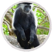 Colobus Monkey Sitting In A Tree 2 Round Beach Towel