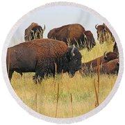 Colorado Buffalo  0099 Round Beach Towel