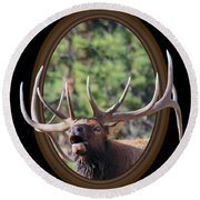 Round Beach Towel featuring the photograph Colorado Bull Elk by Shane Bechler