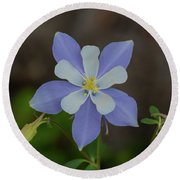 Colorado Columbine Flower Round Beach Towel
