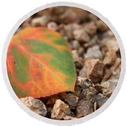 Colorado Fall Colors Round Beach Towel