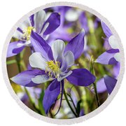 Colorado State Flower Blue Columbines Round Beach Towel by Teri Virbickis
