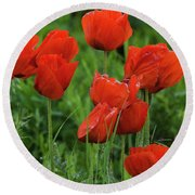 Colorado Wild Poppies Round Beach Towel