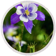 Colorado Wildflower Columbines Round Beach Towel by Teri Virbickis