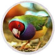 Colorful Bird Round Beach Towel