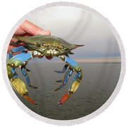 Colorful Blue Crab Round Beach Towel by Phyllis Beiser