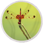 Colorful Dragonfly 2 Round Beach Towel by Phyllis Beiser
