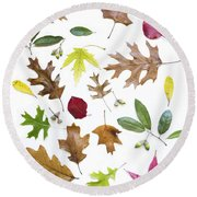 Colorful Fall Leaves Round Beach Towel by Elena Nosyreva