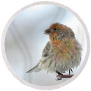 Colorful Finch Eating Breakfast Round Beach Towel