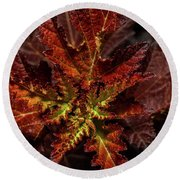 Round Beach Towel featuring the photograph Colorful Leaves by Paul Freidlund