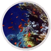 Colorful Lyretail Anthias Round Beach Towel