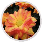 Round Beach Towel featuring the photograph Colorful Mums by Ray Shrewsberry