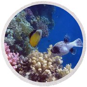 Colorful Red Sea Fish And Corals Round Beach Towel