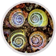 Colorful Snail Shells Still Life Round Beach Towel by Peggy Collins