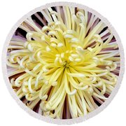 Colorful Spider Chrysanthemum   Round Beach Towel