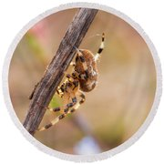 Colorful Spider Hanging From The Stick  Round Beach Towel by Gurgen Bakhshetsyan