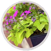 Colorful Summer Flowers In Window Box Round Beach Towel