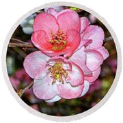 Colors Of Nature - Flowering Quince 008 Round Beach Towel