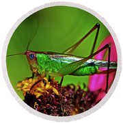 Round Beach Towel featuring the photograph Colors Of Nature - Grasshopper On A Zinnia 001 by George Bostian