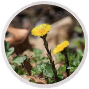 Round Beach Towel featuring the photograph Coltsfoot by Rick Morgan