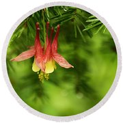 Columbine Blossom Round Beach Towel