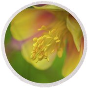 Round Beach Towel featuring the photograph Columbine by Greg Nyquist