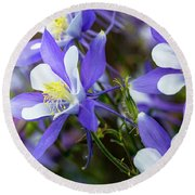 Columbines Round Beach Towel by Teri Virbickis