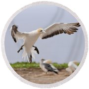 Coming In To Land Round Beach Towel