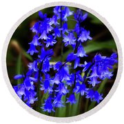Round Beach Towel featuring the photograph Common Bluebell by Baggieoldboy
